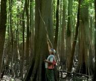 Cypress Watermark