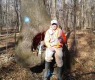 Decayed Oak