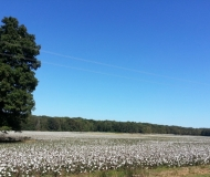 Land of Cotton & Timber