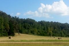 Tennessee Woodlots