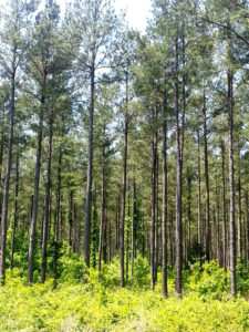 Market Report 3rd Quarter 2019 - Tennessee Timber