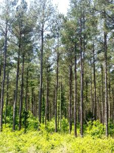 timber-sales-admin