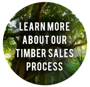timber-sales-process